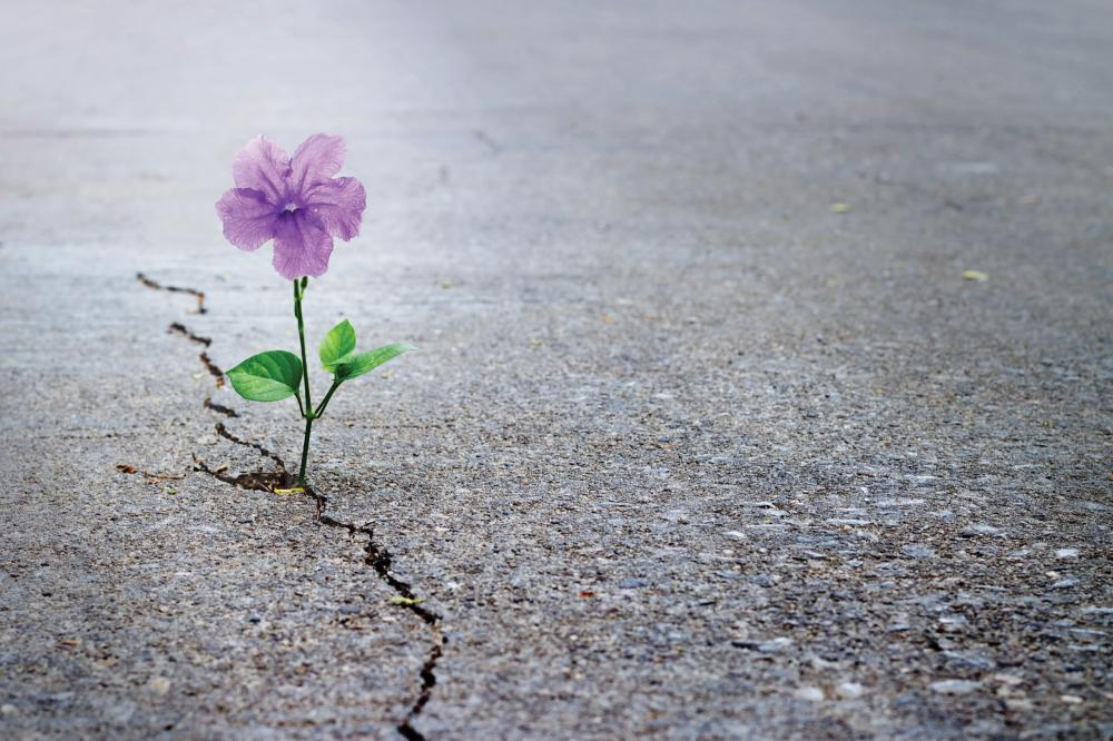 Close up of flower growing up from crack in the asphalt road
